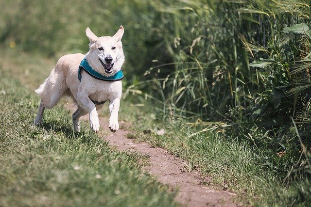 Why Dogs Run Away From You And How To Prevent It